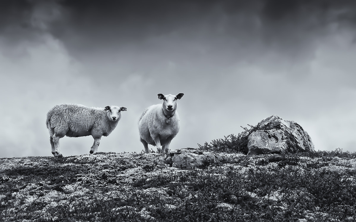 Photograph Baa aaa by Ann Thomstad on 500px