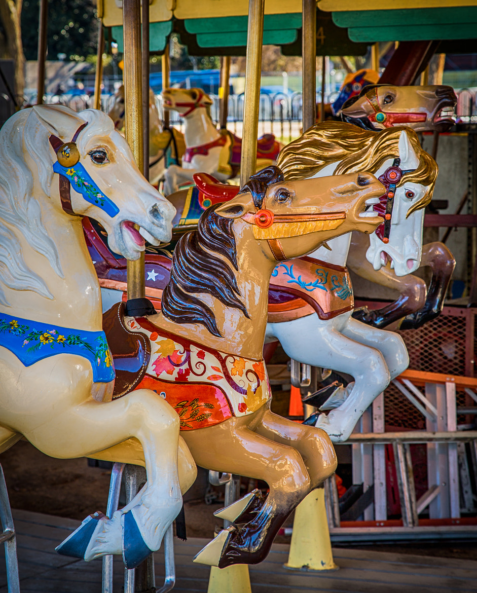 Photograph Three Merry Go Round Horses by Scott Nelson on 500px