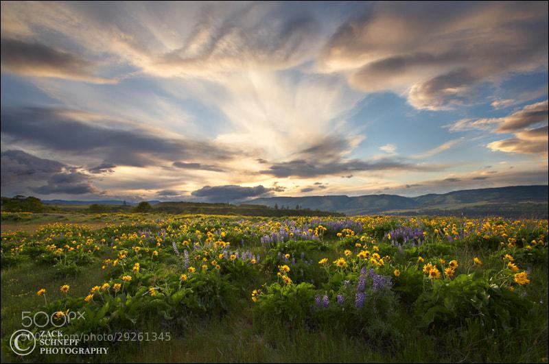 Photograph Rowena Wildflower Storm by Zack Schnepf on 500px