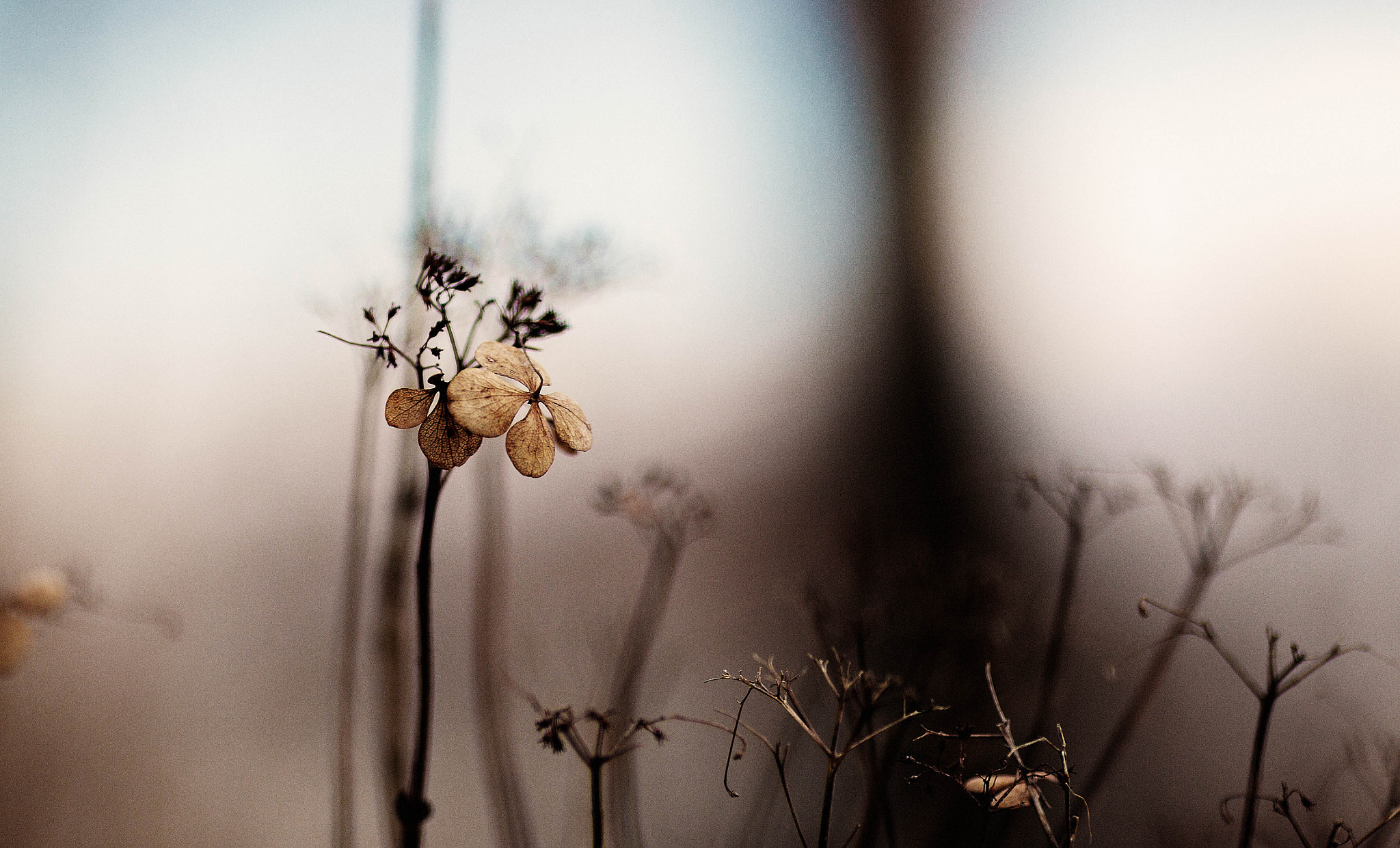 Photograph { Waiting For Spring } by Anh Gerrard  on 500px