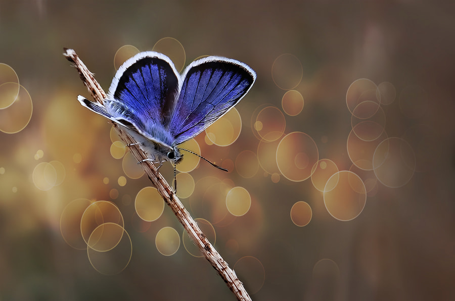 Photograph Butterfly effect - V by Necat ÇETİN on 500px