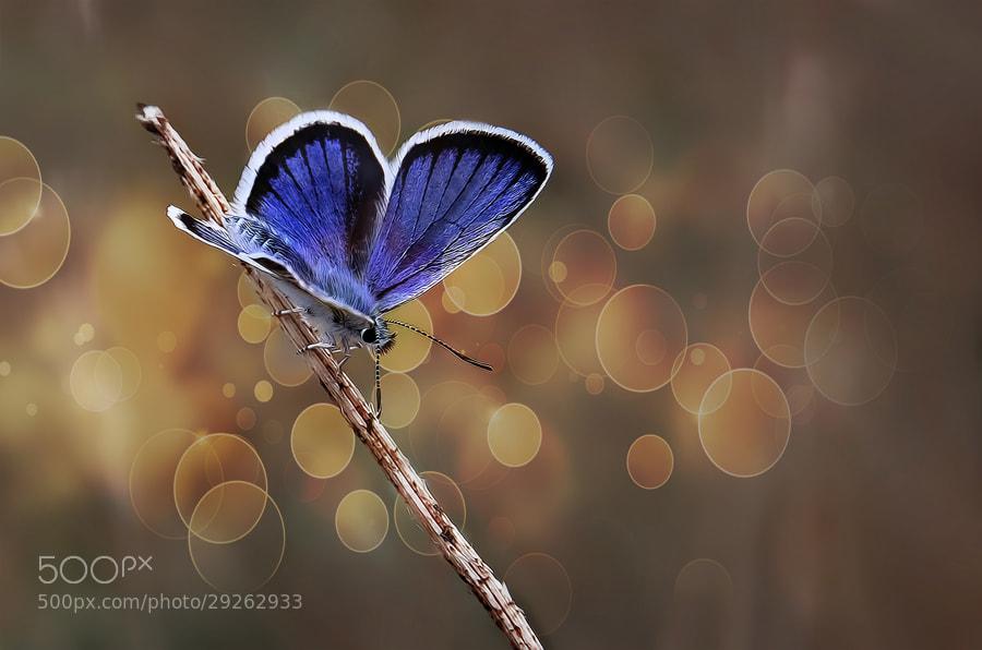 Photograph Butterfly effect - V by Necat ÇETİN on 500px