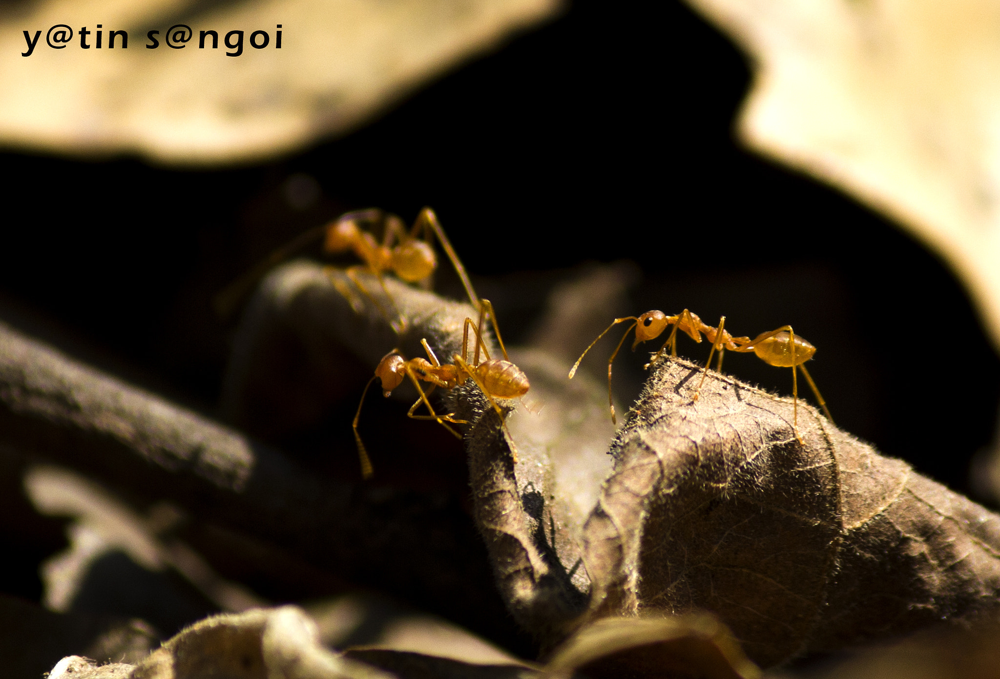 Photograph army ants by yatin sangoi on 500px