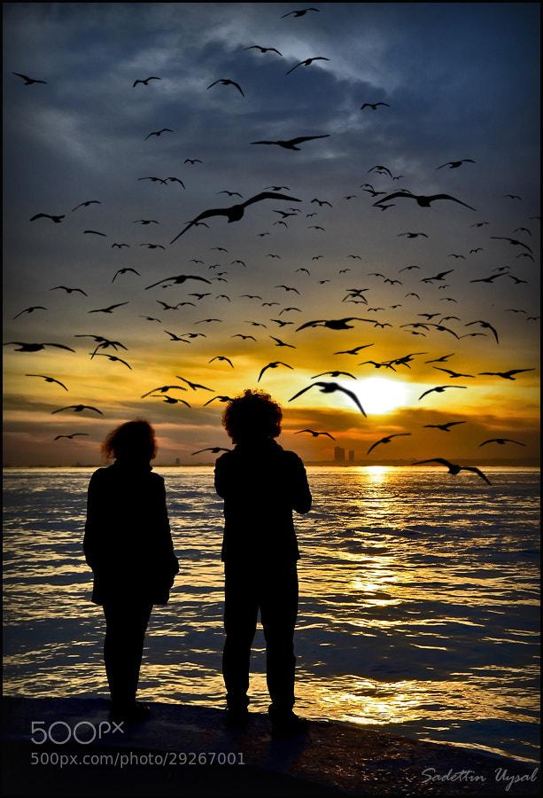 Photograph Seagulls and Sunset by Sadettin  Uysal on 500px