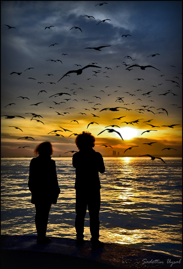 Photograph Seagulls and Sunset by Sadettin  Uysal on 500px