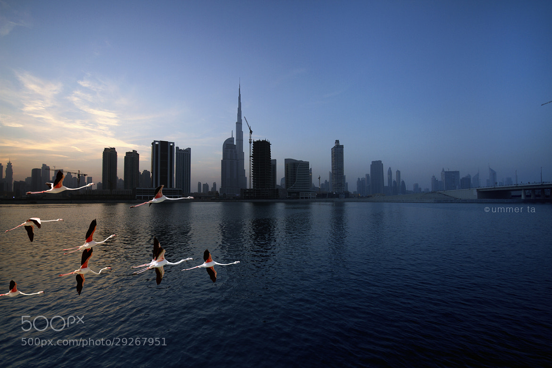 Photograph Dubai by Artist Ummer Ta  on 500px