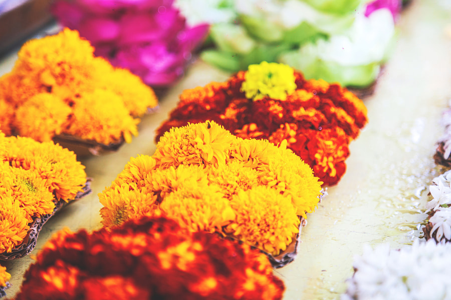 Flower Offerings, Temple of the Tooth, Kandy #6