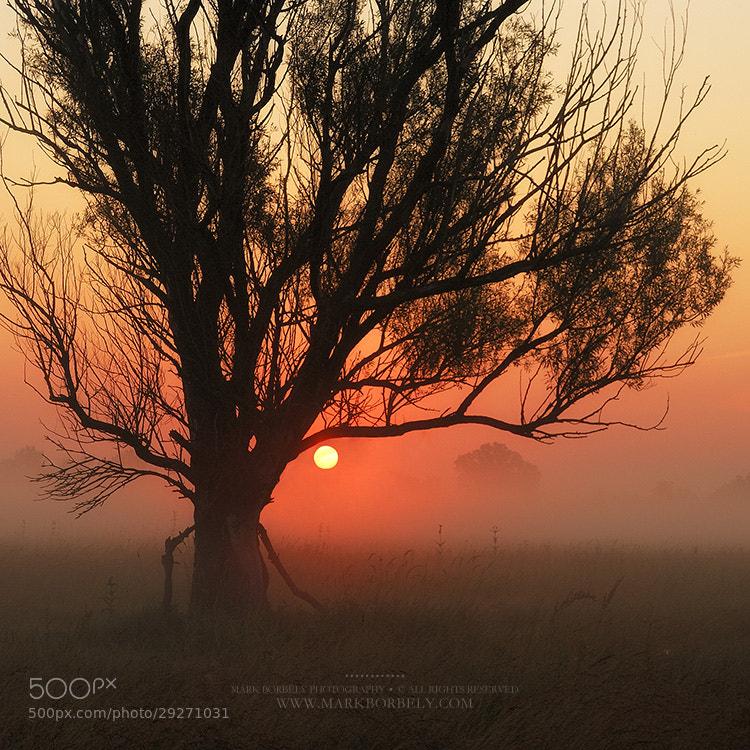 Photograph 4 AM by Márk Borbély on 500px