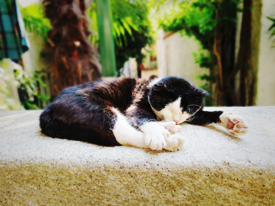 Photograph Old Sleeping cat by Federica Galli on 500px