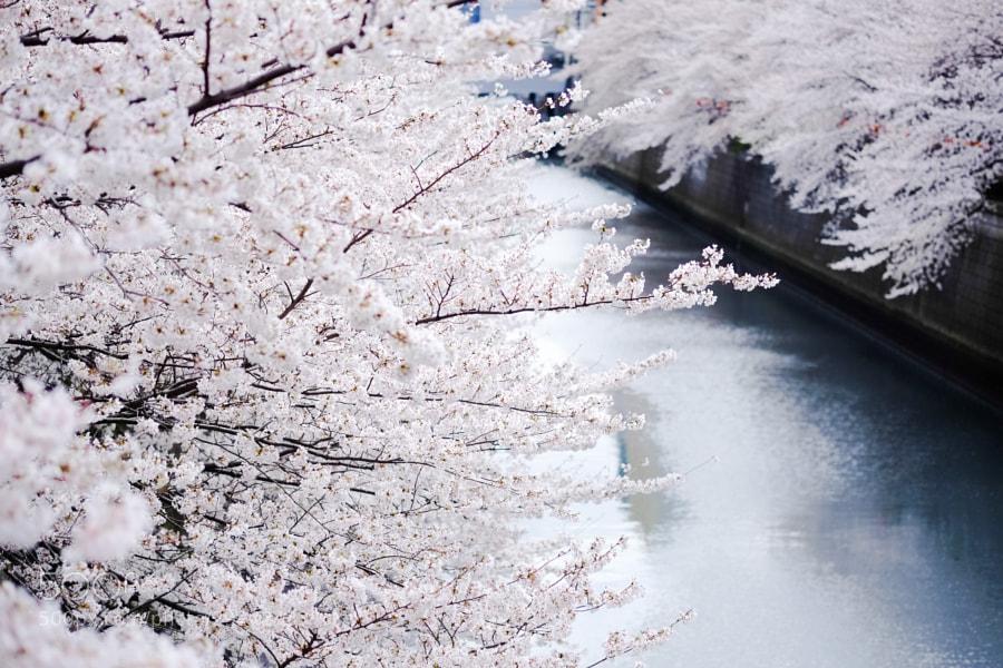 Meguro River, Today by Hitoshi NAKAMURA (hitoshi)) on 500px.com