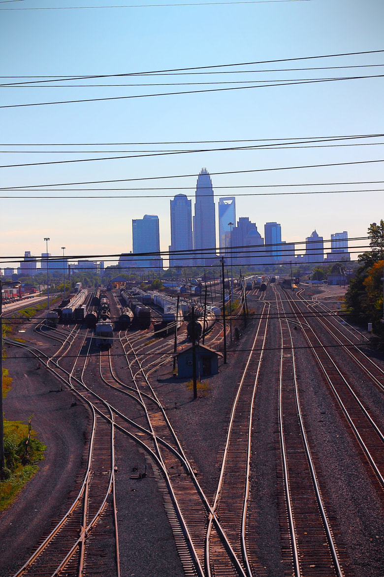 Photograph Veins of Charlotte by David Swan on 500px