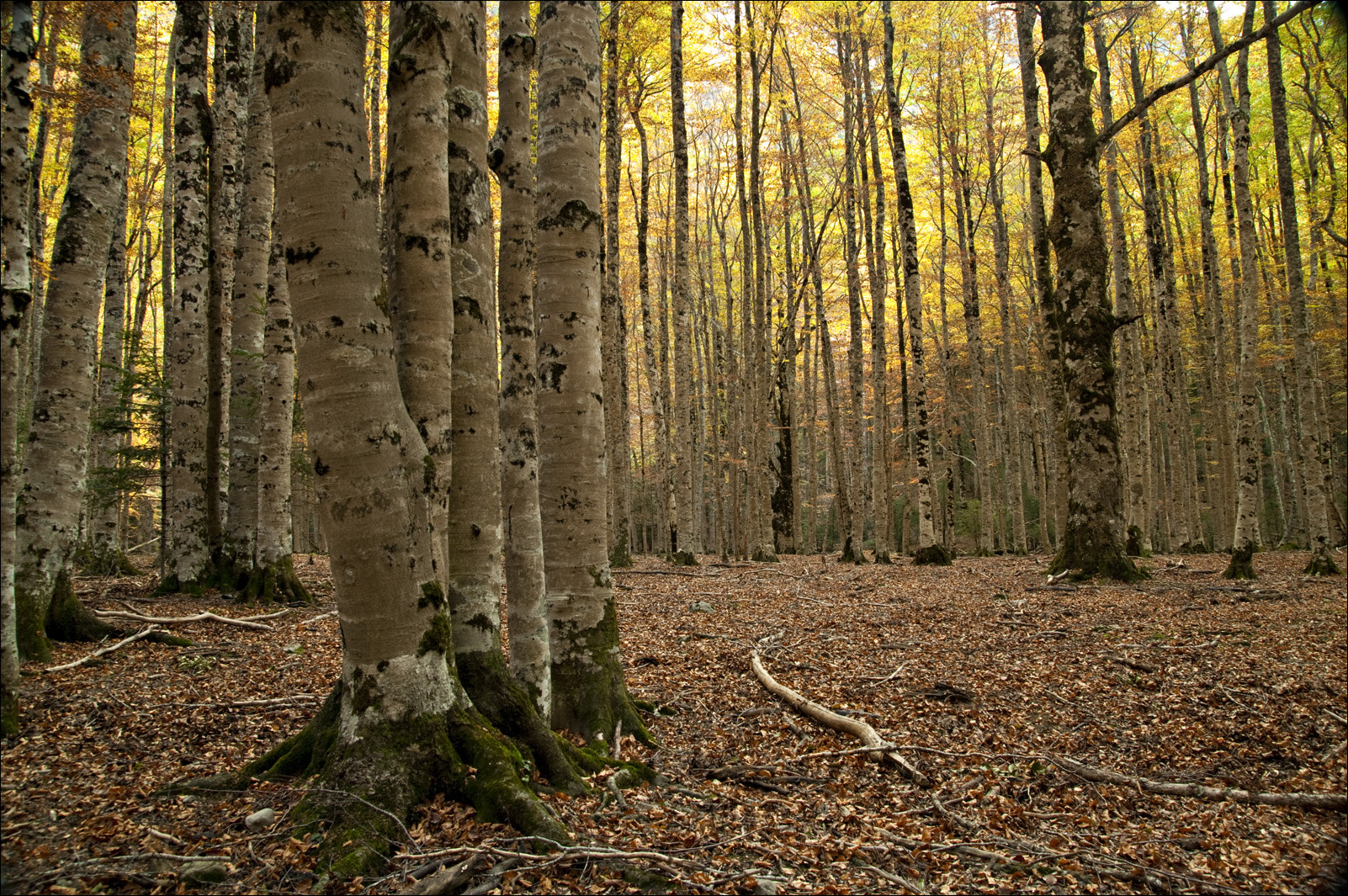 Photograph Beech by Cesar Torres  on 500px