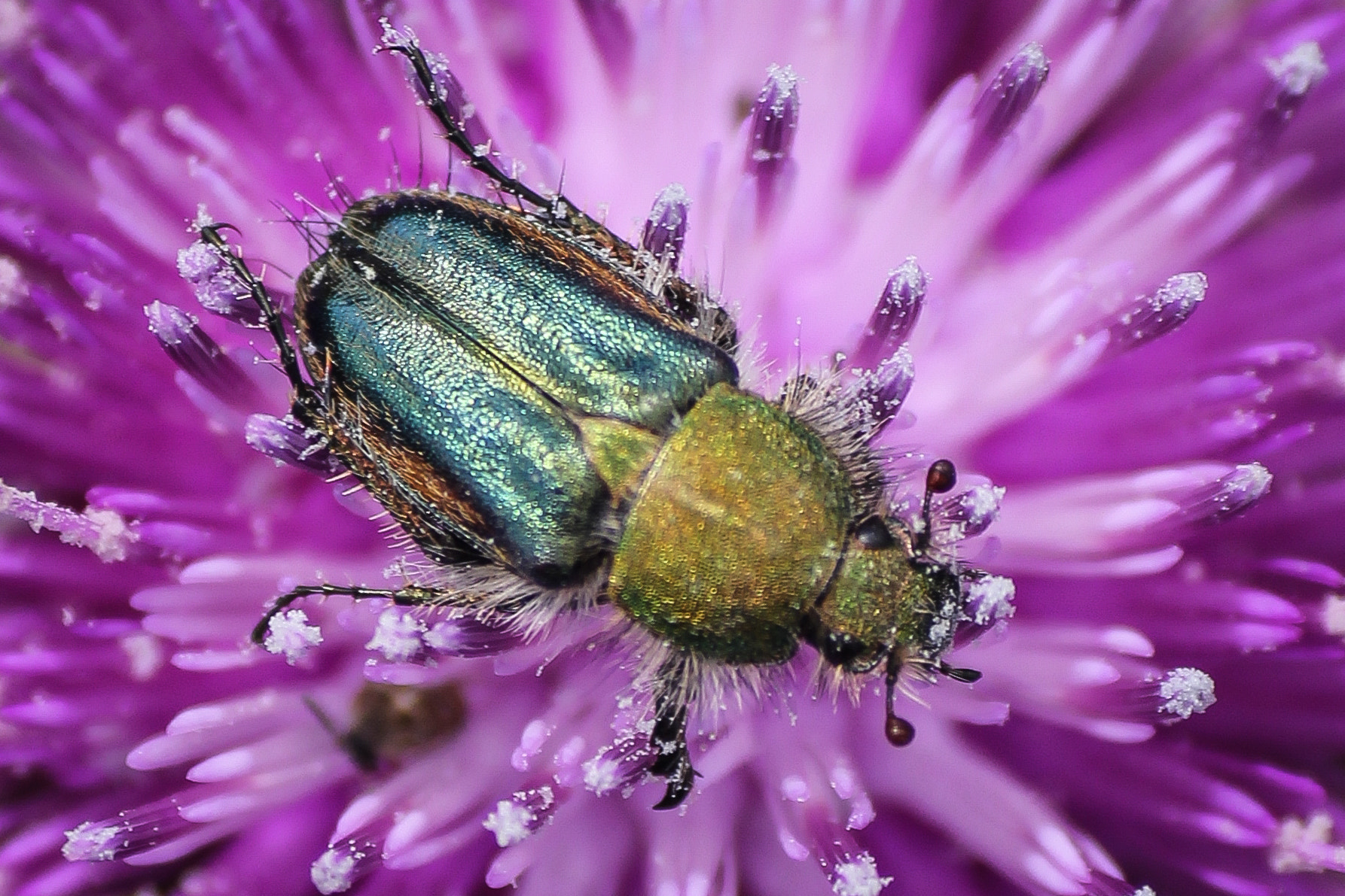 Photograph Bathing Beetle by Ofer Perl on 500px