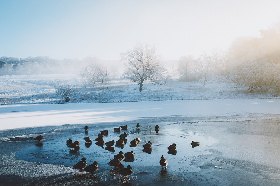 Frozen Mornings  by Daniel Casson on 500px.com