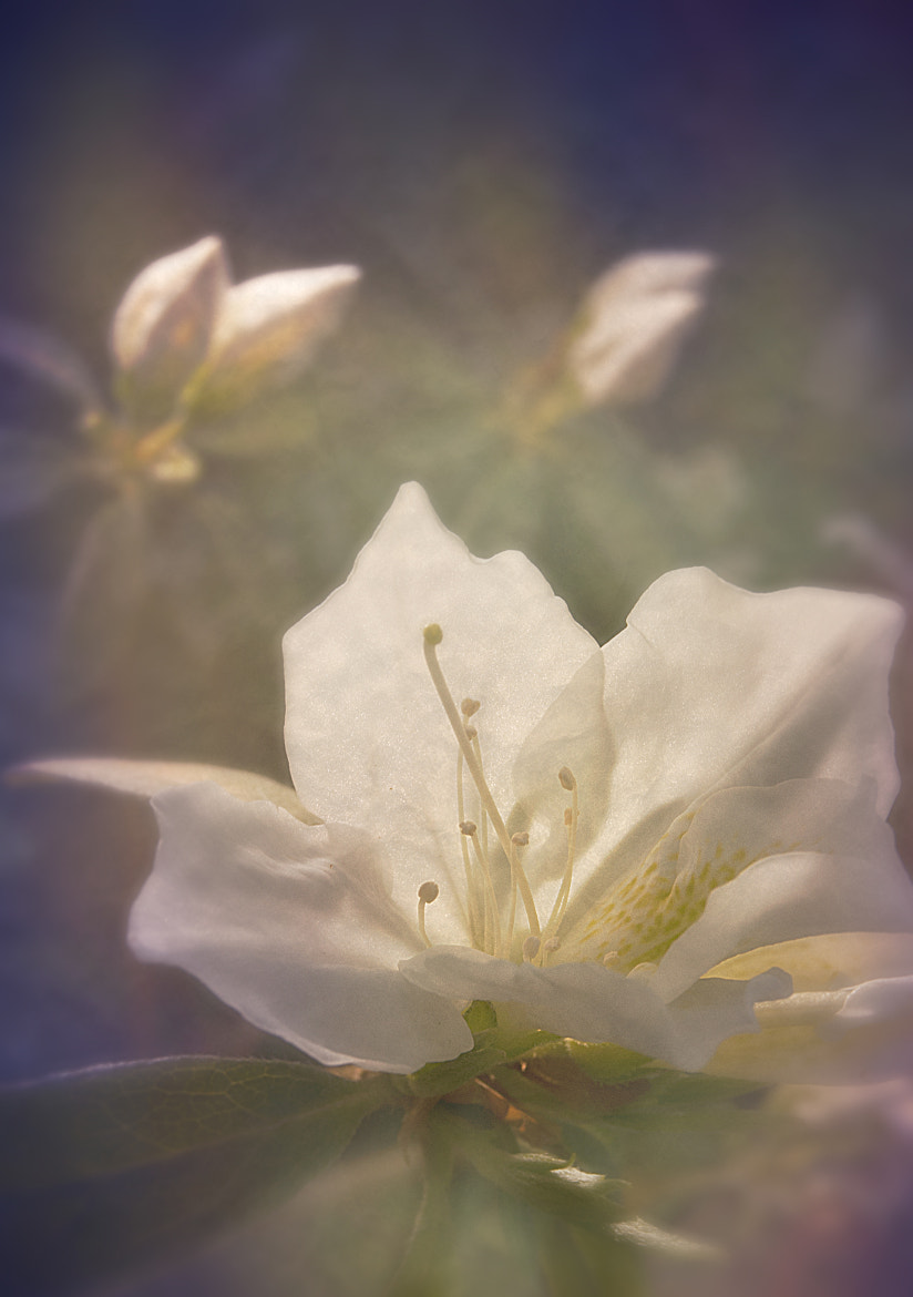 Photograph Dreaming of Spring by Nicole Roloff on 500px