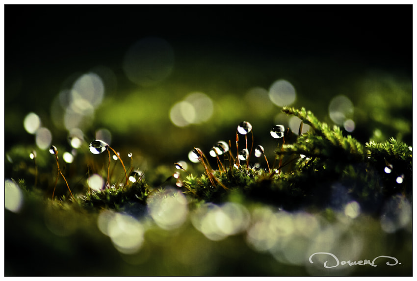 Photograph Pure Nature by Domen  Dolenc on 500px