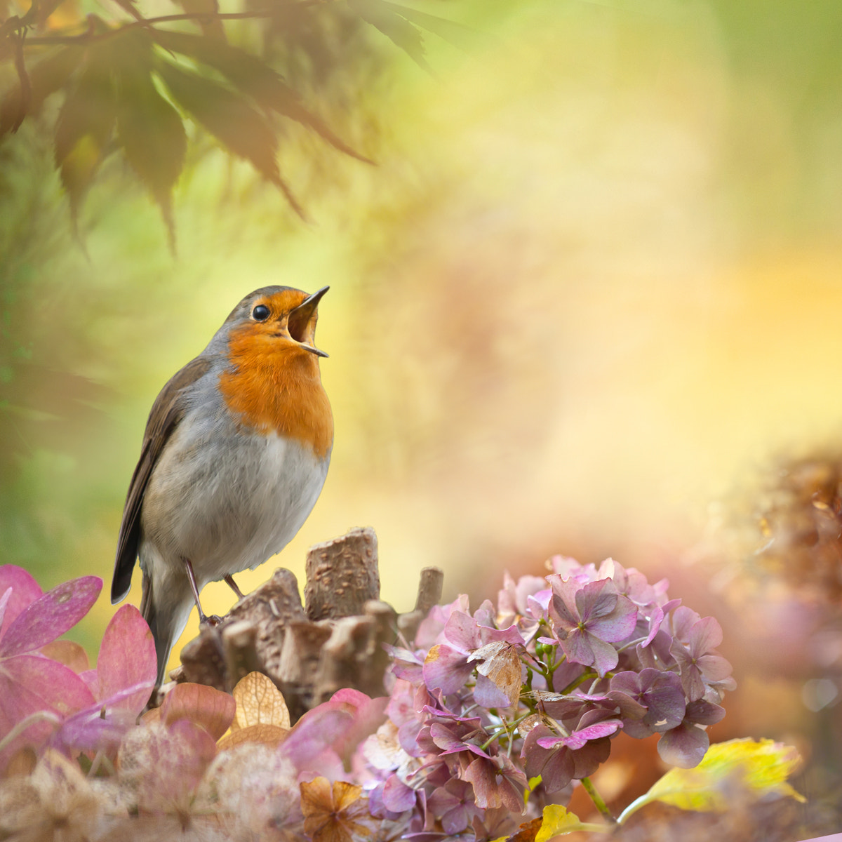 Photograph Robin fantasy by Teuni Stevense on 500px