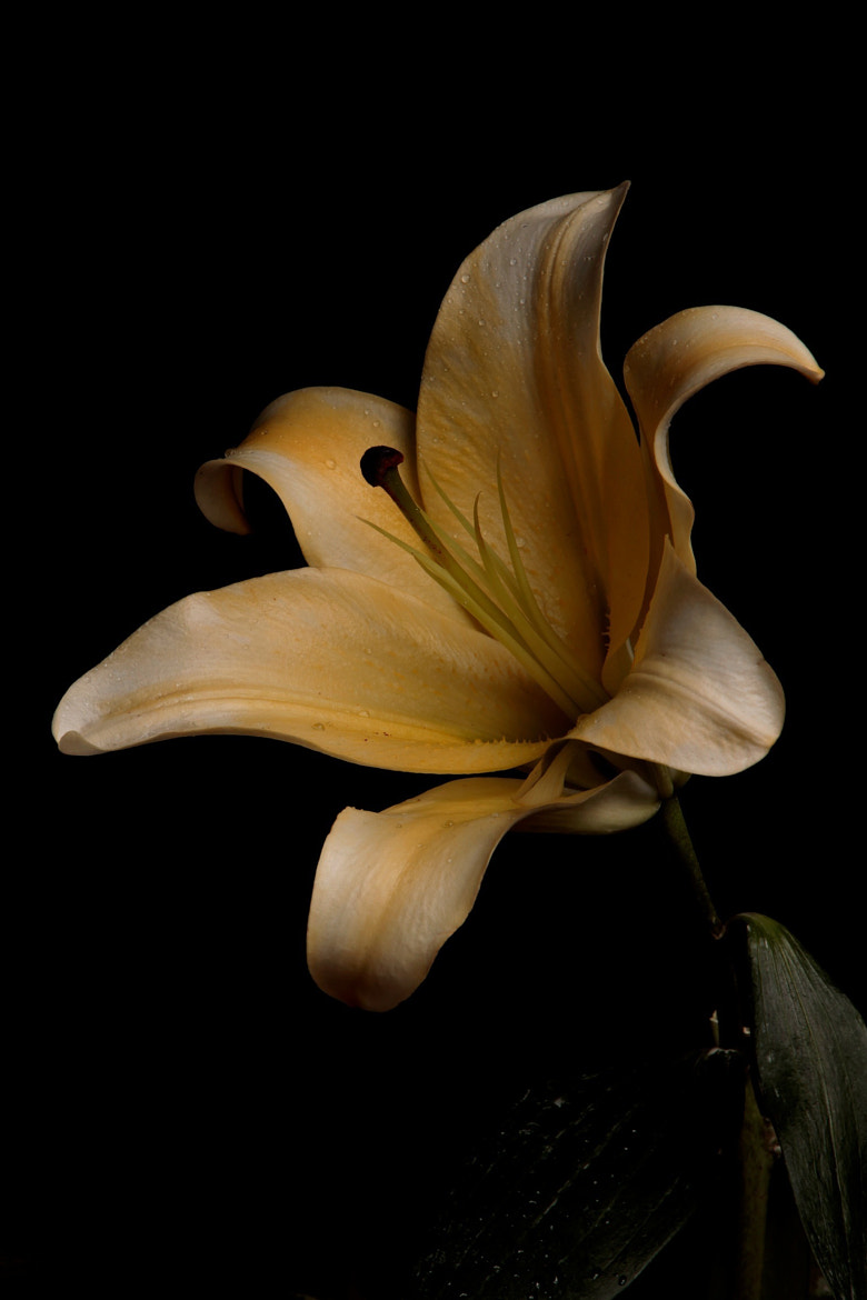 Photograph Lilly by Cristobal Garciaferro Rubio on 500px