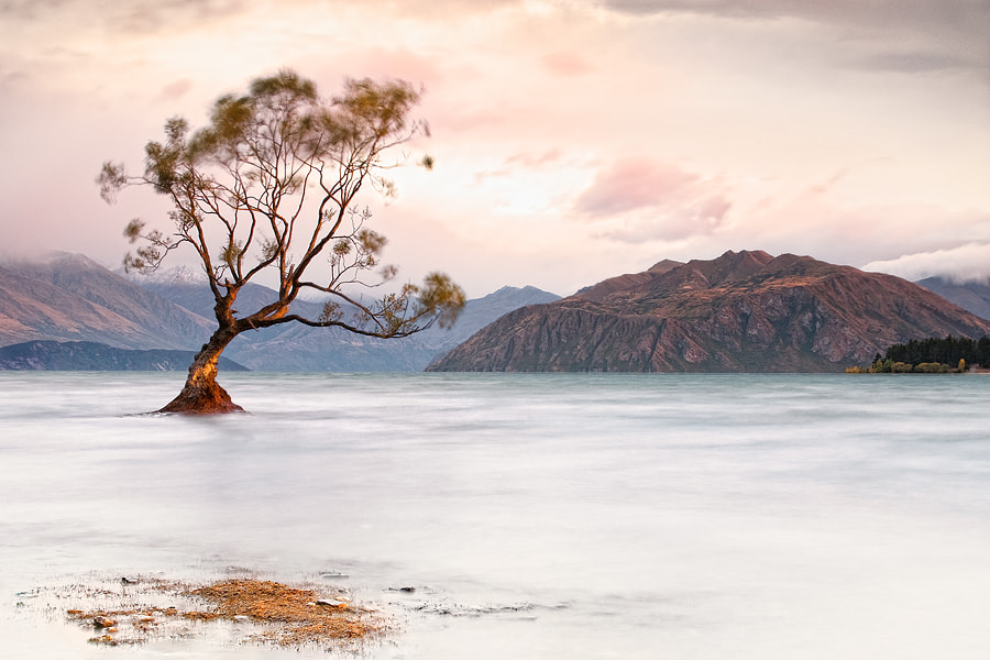 Photograph One tree by Andrew Deer on 500px