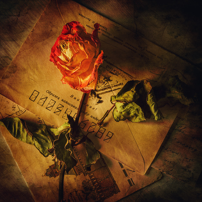 Photograph A Rose for the Death by PolTergejst  on 500px