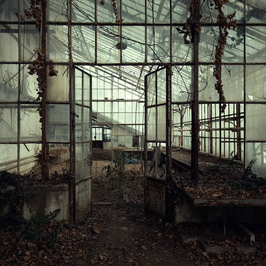 the beauty of decay by Michael Schnabl on 500px.com