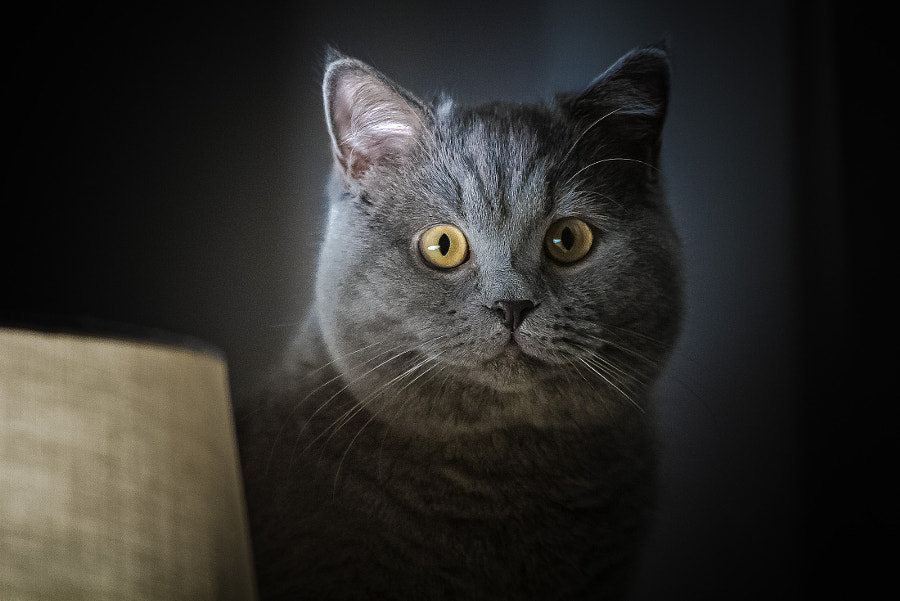 Cat by Jacek Brun on 500px.com