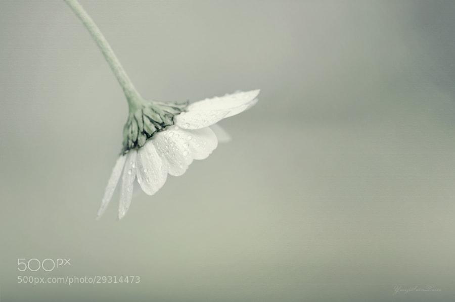 Photograph Flower by yavuzselimturan  on 500px