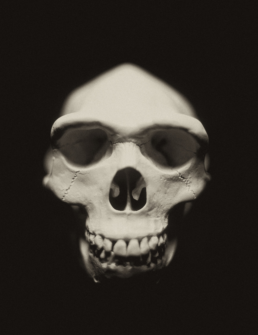 Photograph Homo Sapien Skull replica cast by Sean Arbabi on 500px