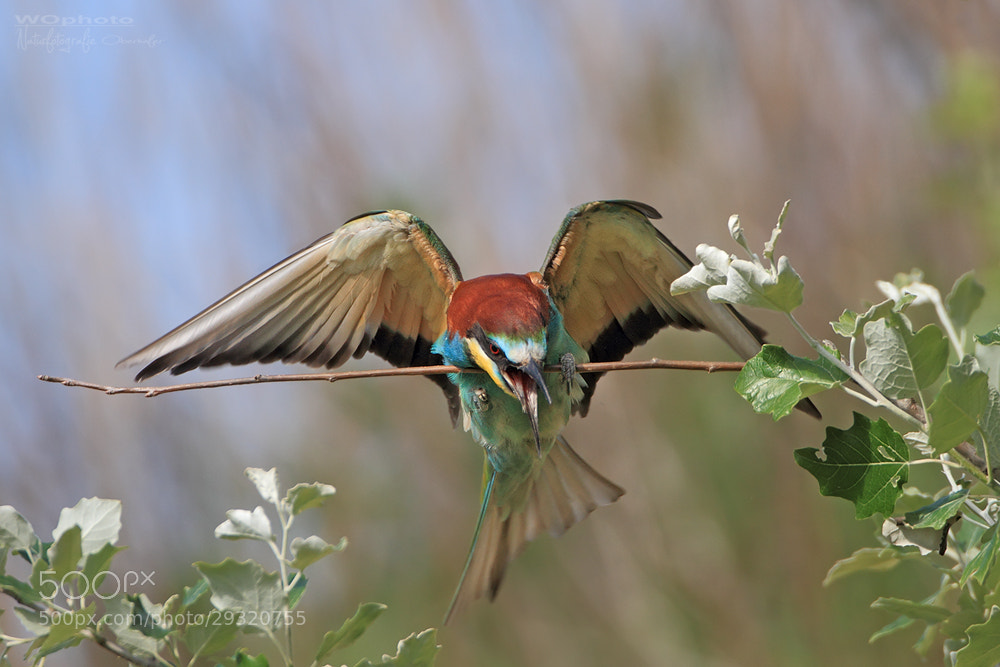 Photograph Bad Landing by Walter Oberhofer on 500px