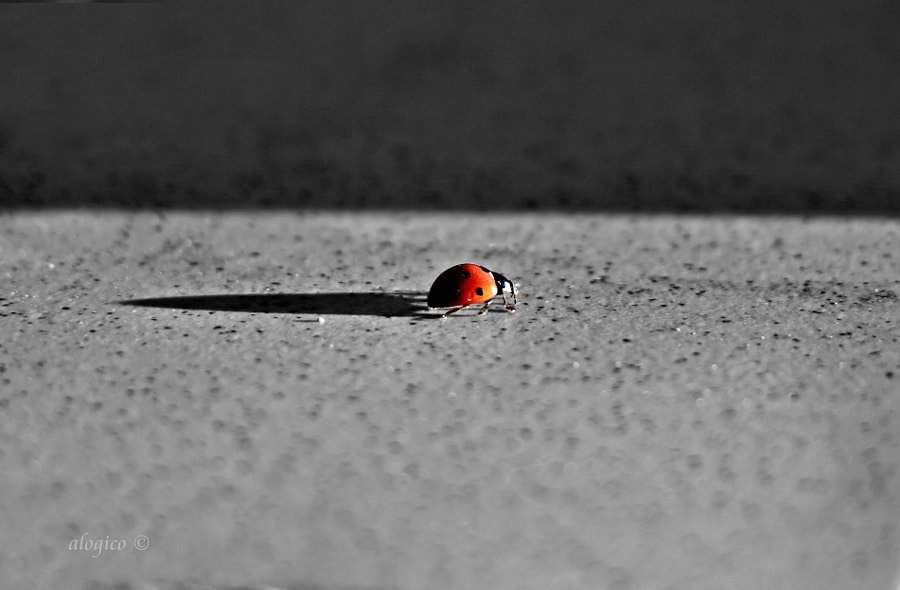 ladybug on black and white with ray of sunlight