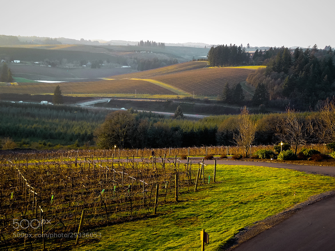Photograph Willamette Valley Vineyard, Oregon by P  on 500px