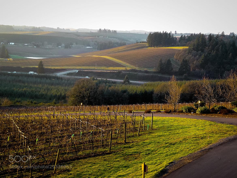 Photograph Willamette Valley Vineyard, Oregon by Dennis Mai on 500px