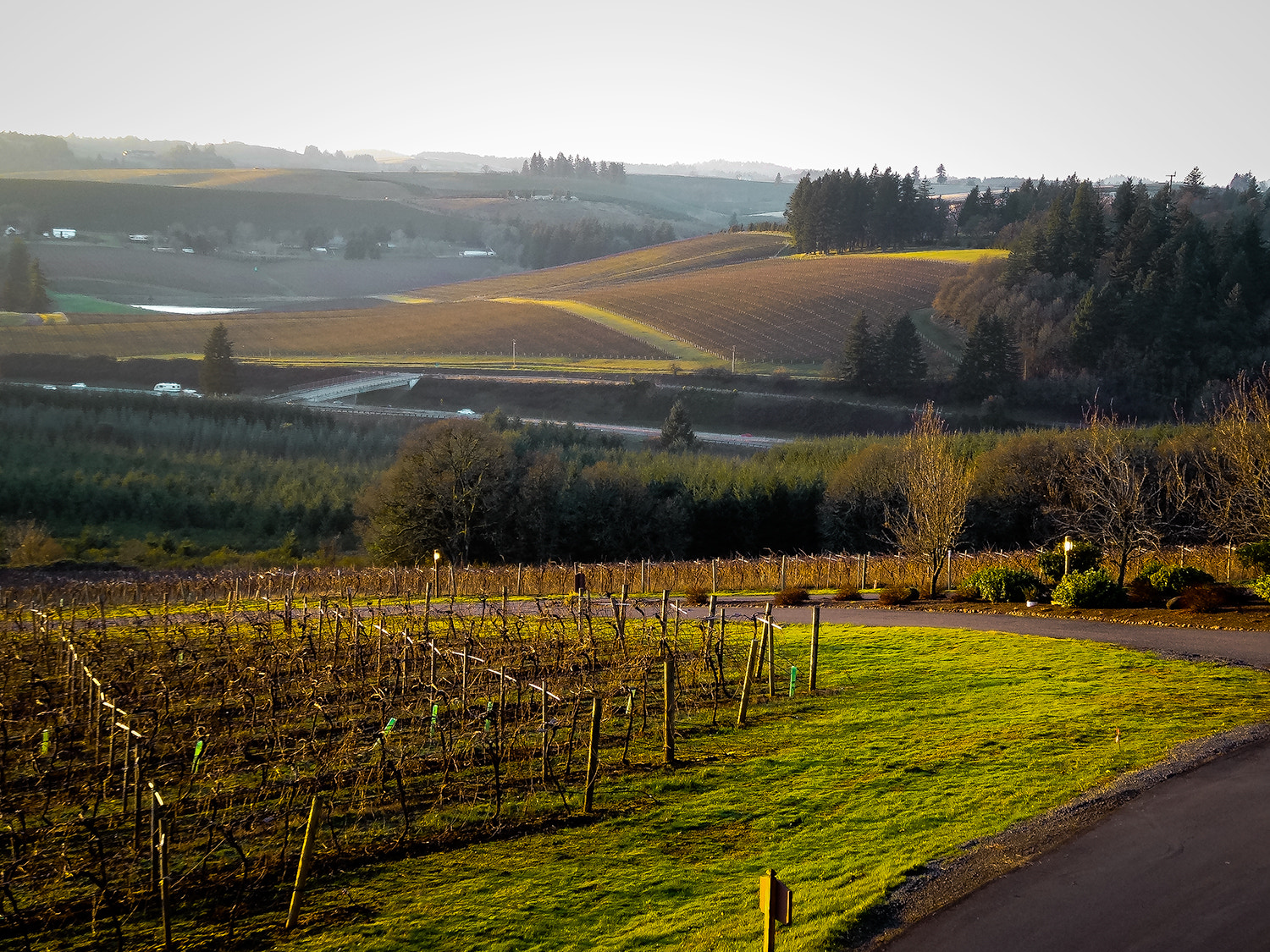Photograph Willamette Valley Vineyard, Oregon by Dennis Mai on 500px