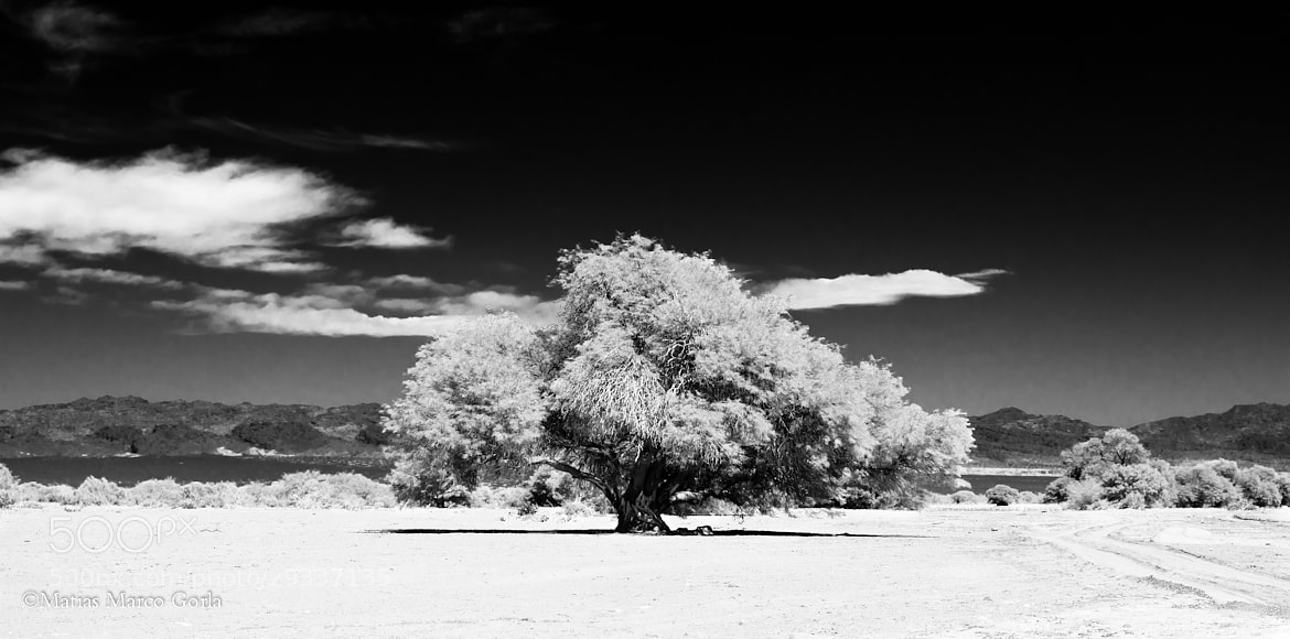 Photograph White Tree by Matias Gorla on 500px
