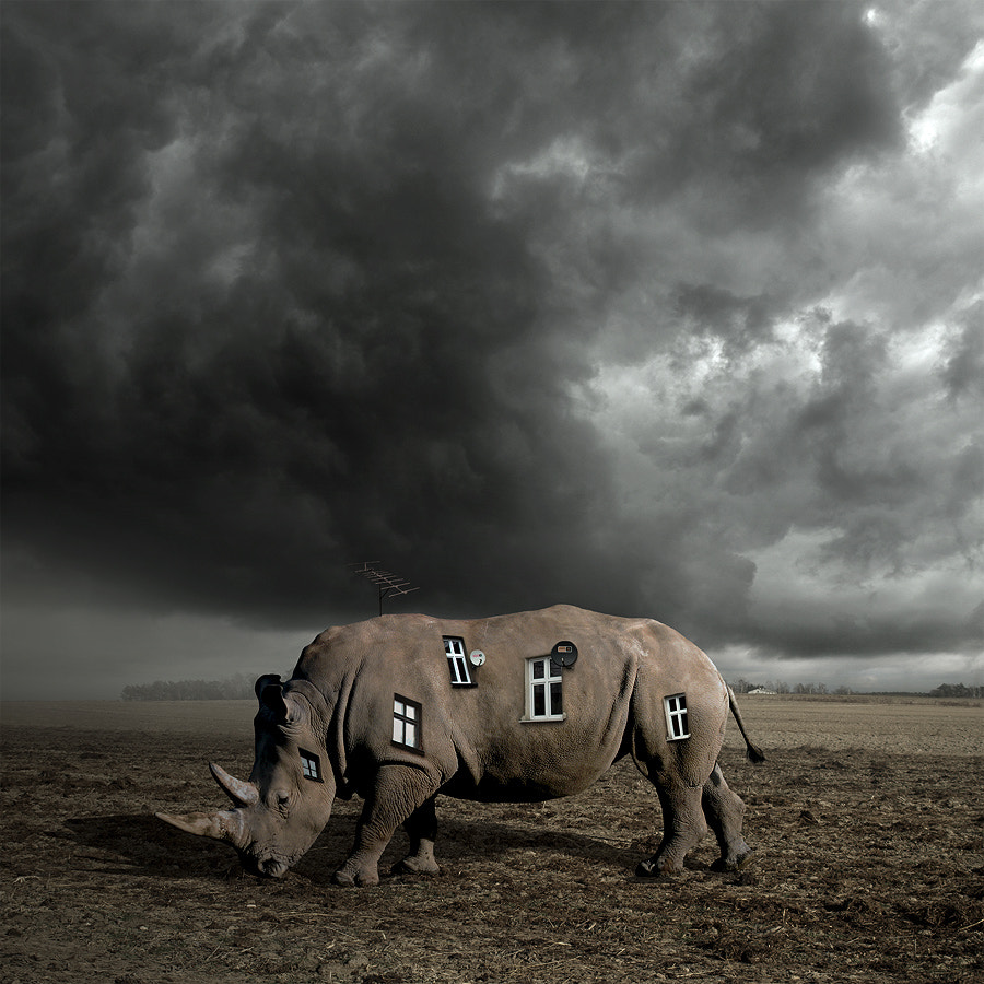 Photograph Rhino's world 2 by Tomasz  on 500px