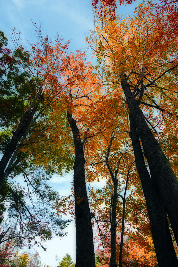 Photograph Fall on high by Ernesto Franklin on 500px