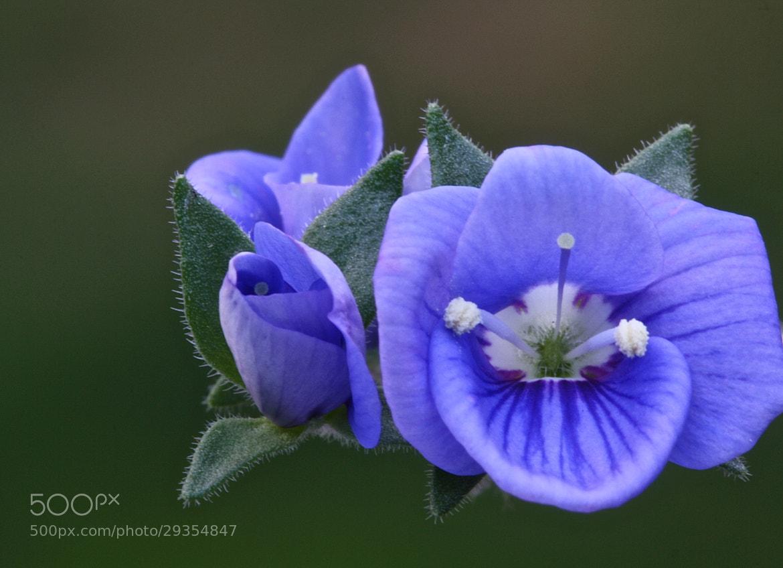 Photograph Blue by Rick Urbanski on 500px
