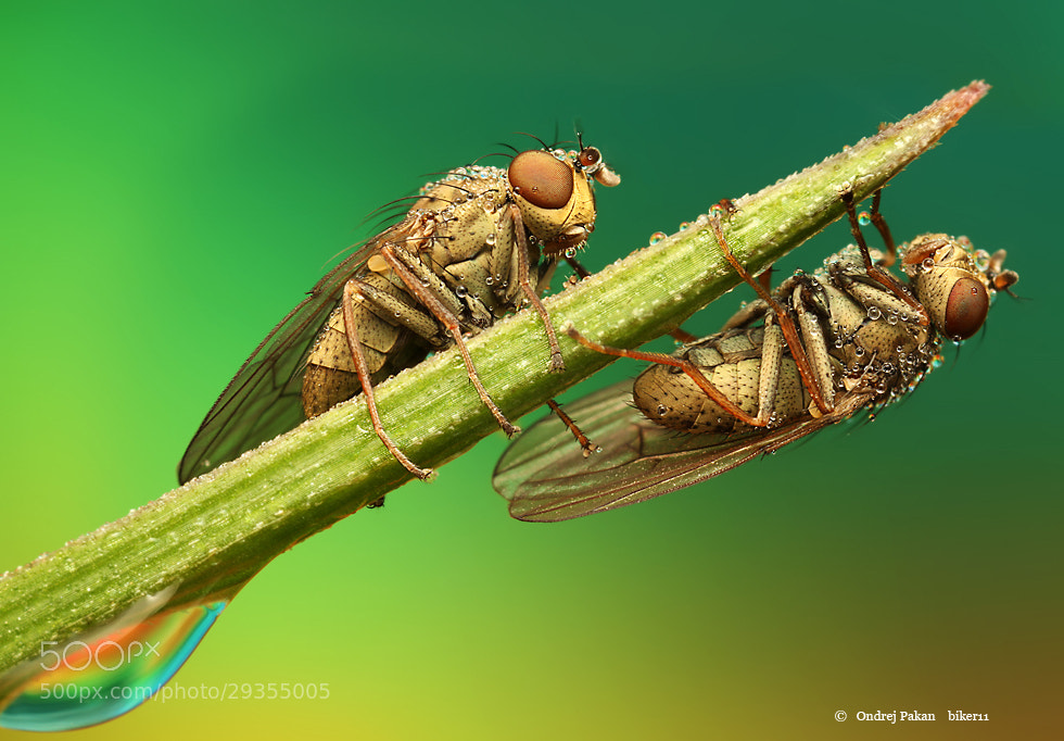 Photograph Double team by Ondrej Pakan on 500px