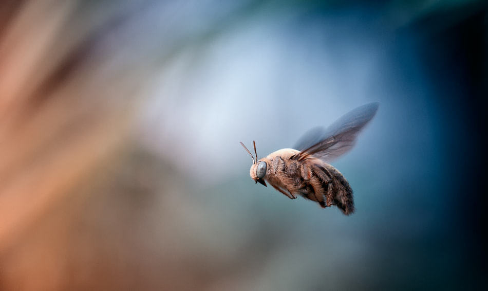 Photograph Come fly with me by Heri Wijaya on 500px