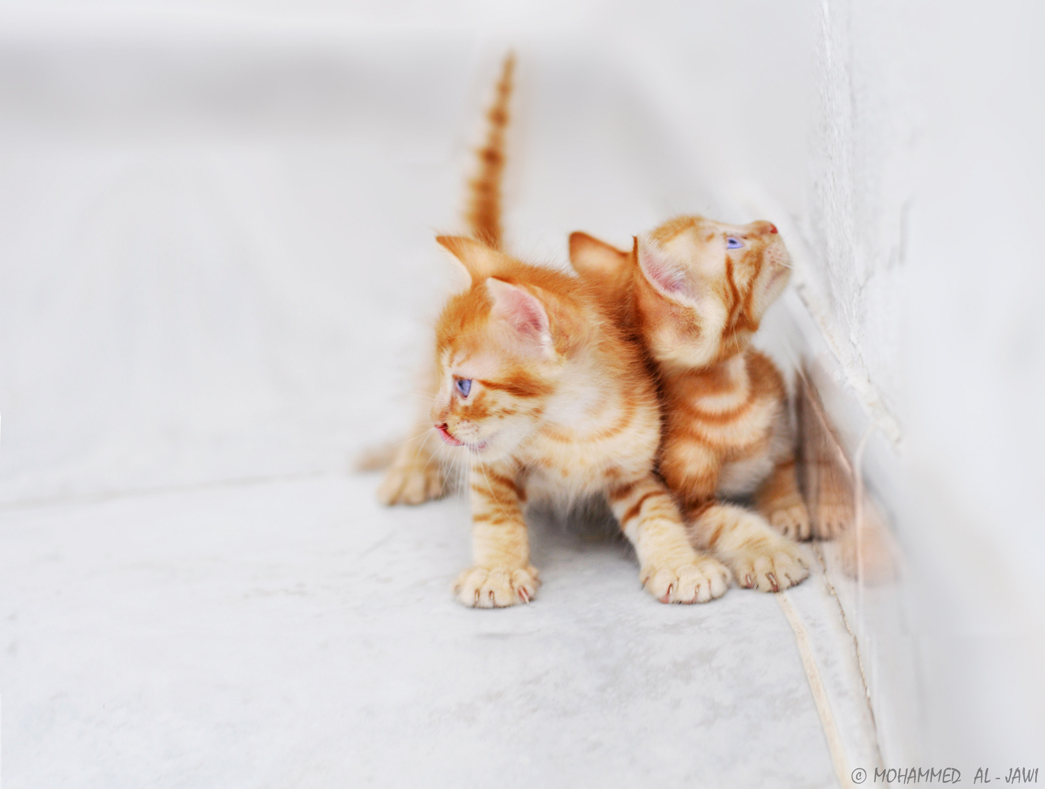 Photograph kittens by  Mohammed Al-Jawi on 500px