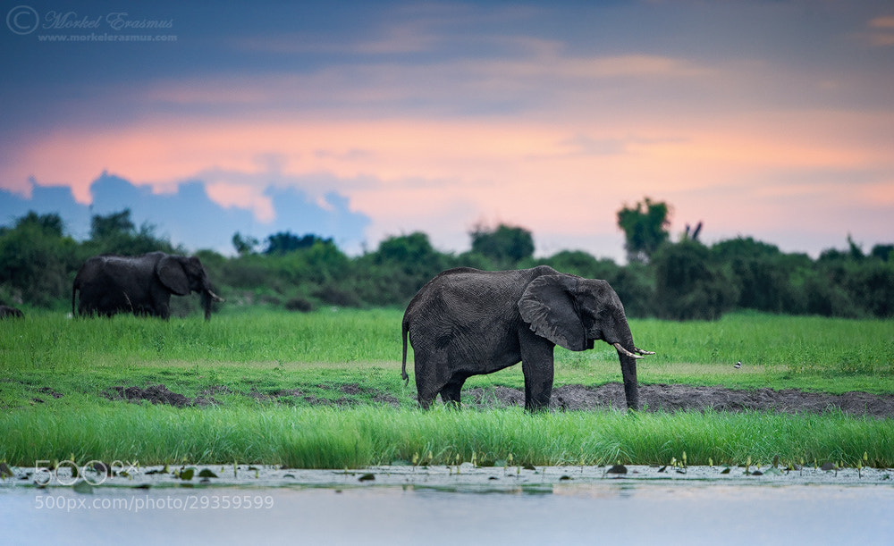 Photograph Sunset on the Chobe by Morkel Erasmus on 500px