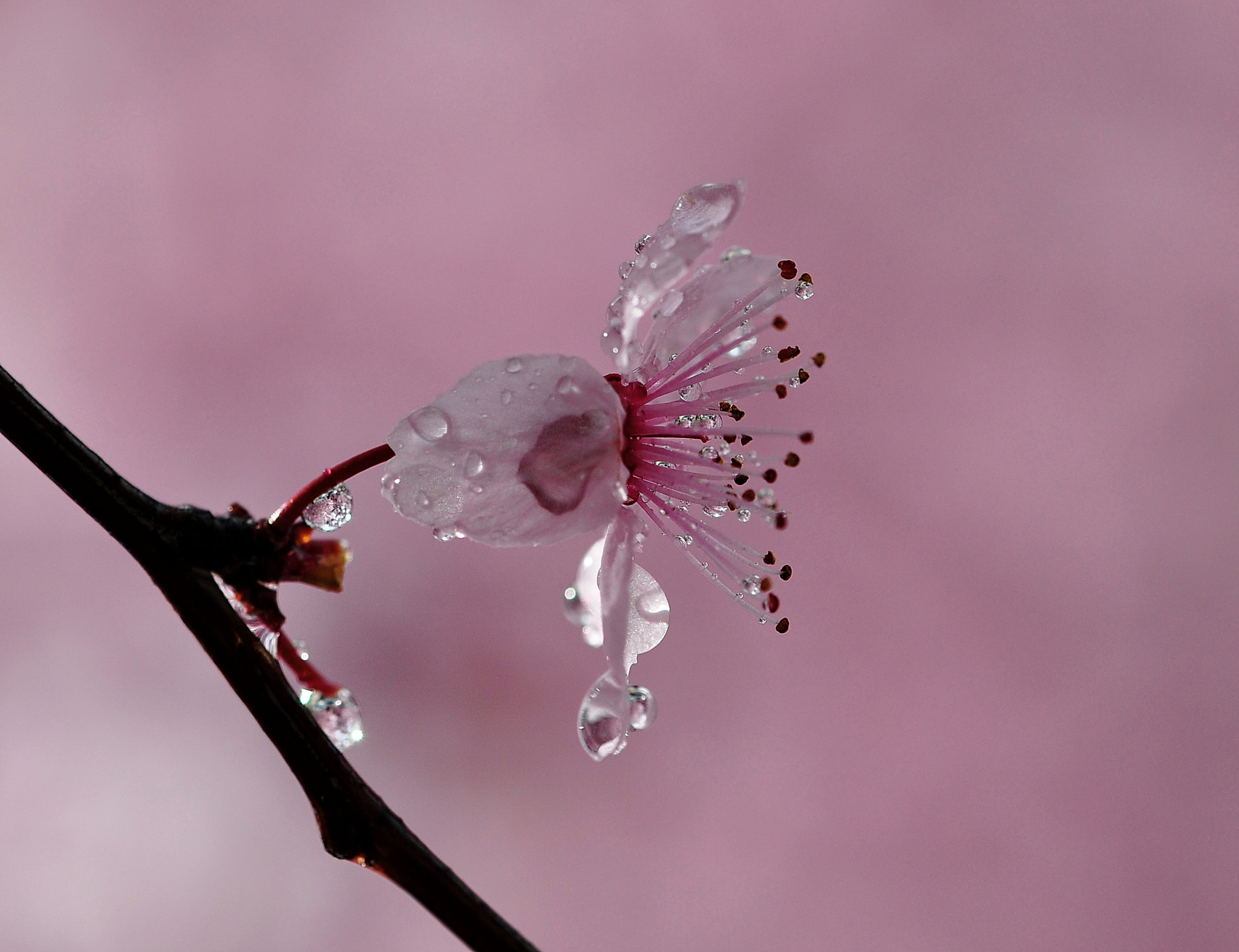 Photograph spring by tugba kiper on 500px