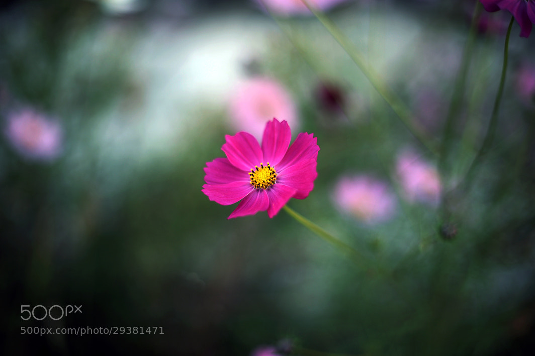 Photograph Cosmos 4 by young yourl Han on 500px