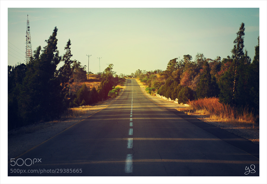 Photograph The road by Yulia Sashko on 500px
