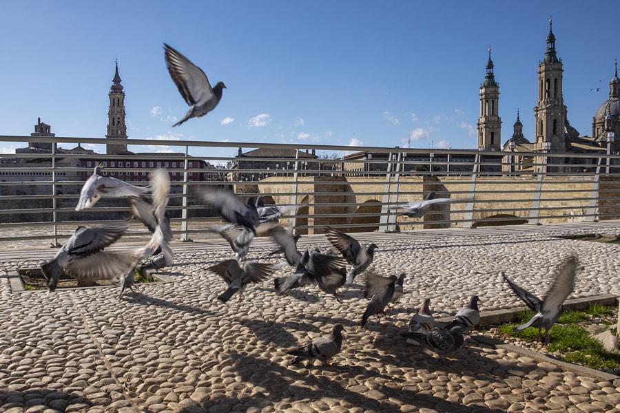 Flying Doves by Ana V. on 500px.com