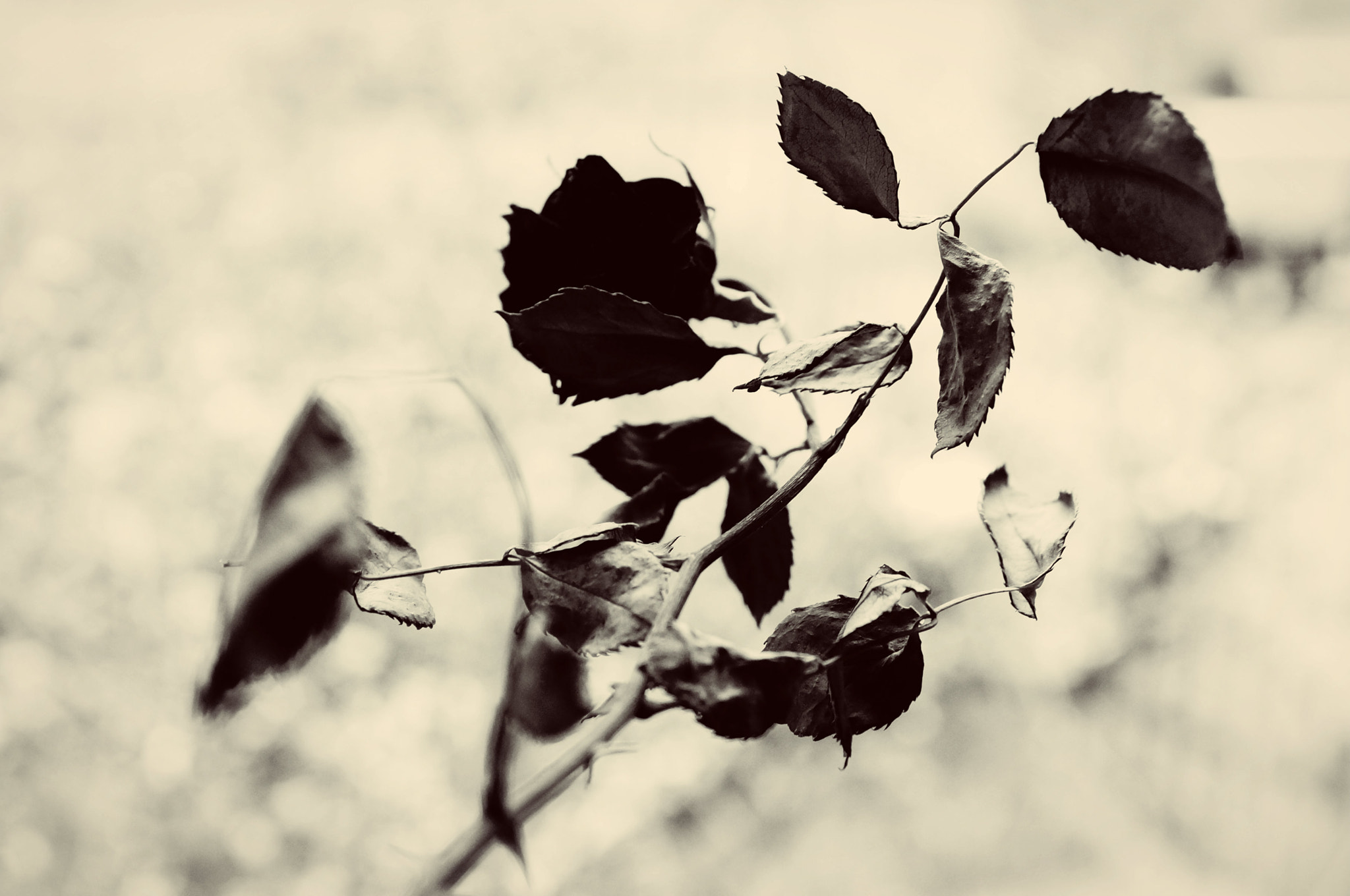 Photograph cold roses by junicorn on 500px