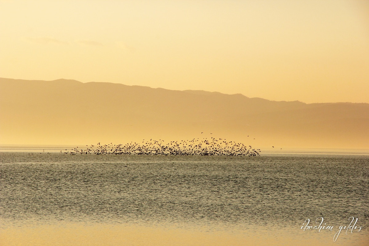 Photograph Lake Birds by Ibrahim YILDIZ on 500px