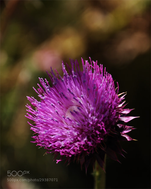 Photograph Flora IV by Facundo Sarthes on 500px