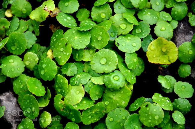 Photograph Flora VII by Facundo Sarthes on 500px
