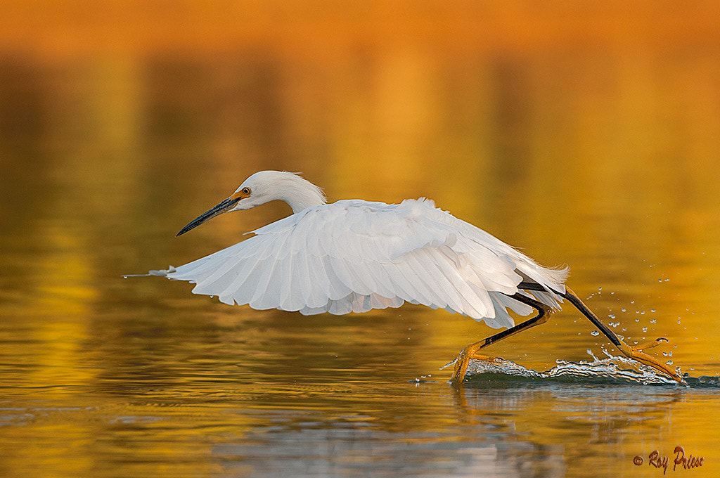 Photograph Walking on Water by Roy Priest on 500px
